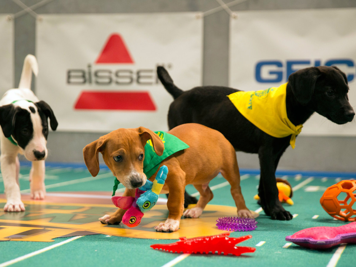 puppy-bowl-sully-noodle-and-maybell.jpg
