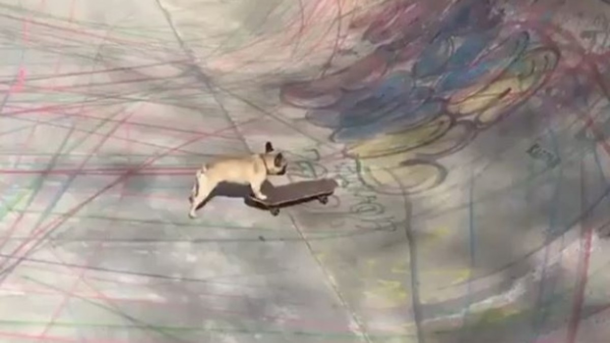 skateboard-dog.JPG