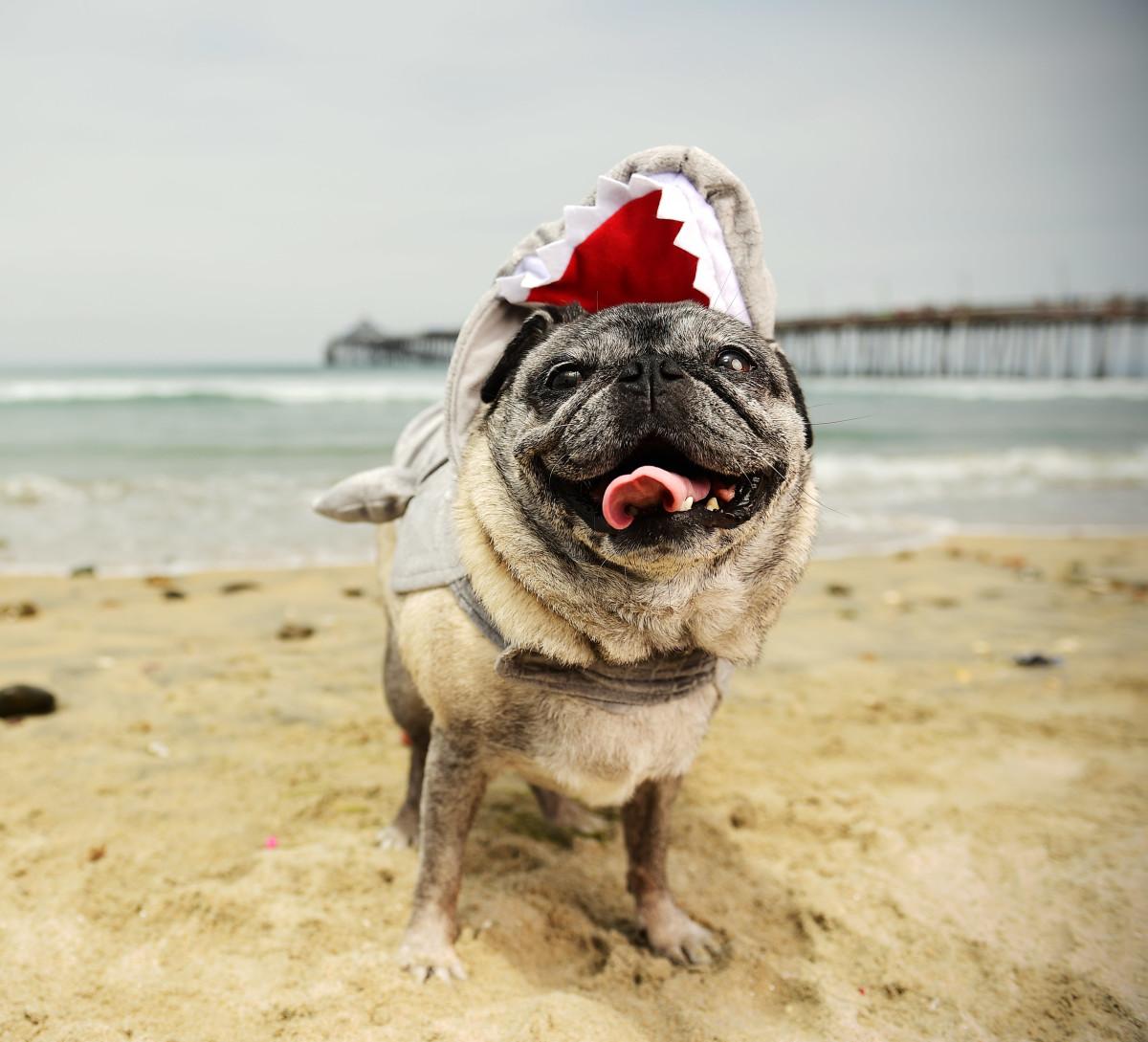 Surfing_Dogs_Gallery_022.jpg
