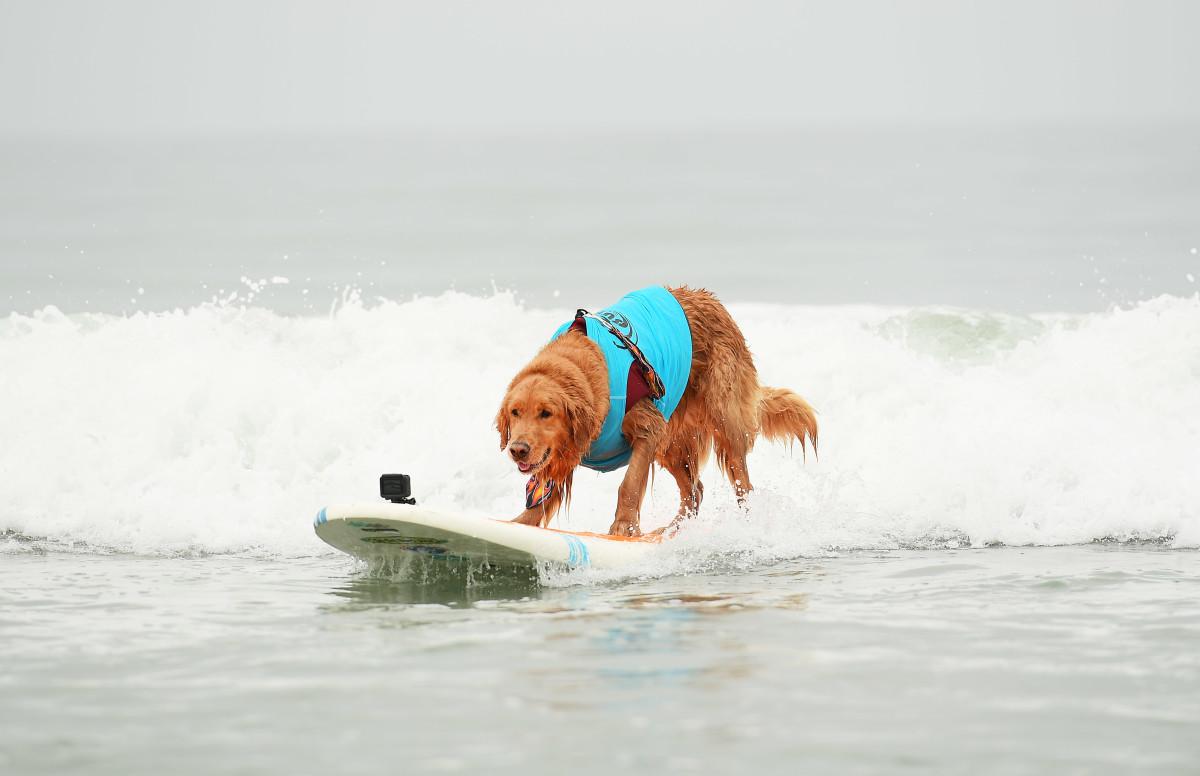Surfing_Dogs_020.jpg