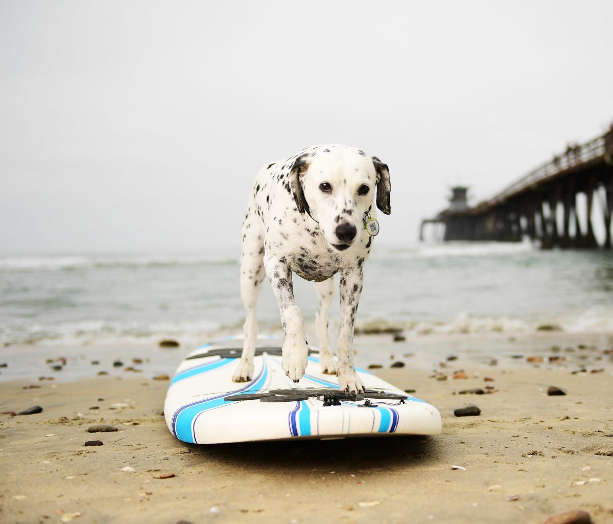 Surfing_Dog_Gallery_033.jpg