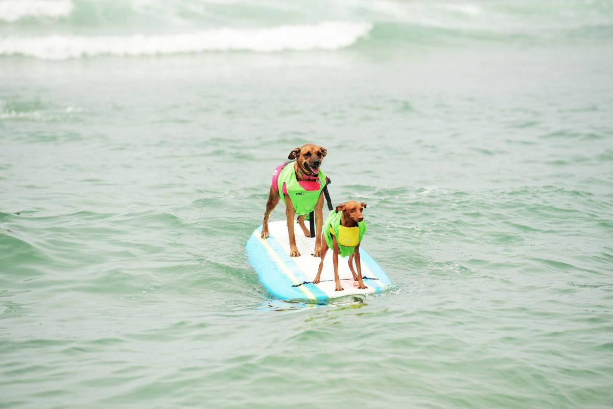 Surfing_Dogs_Gallery_009.jpg