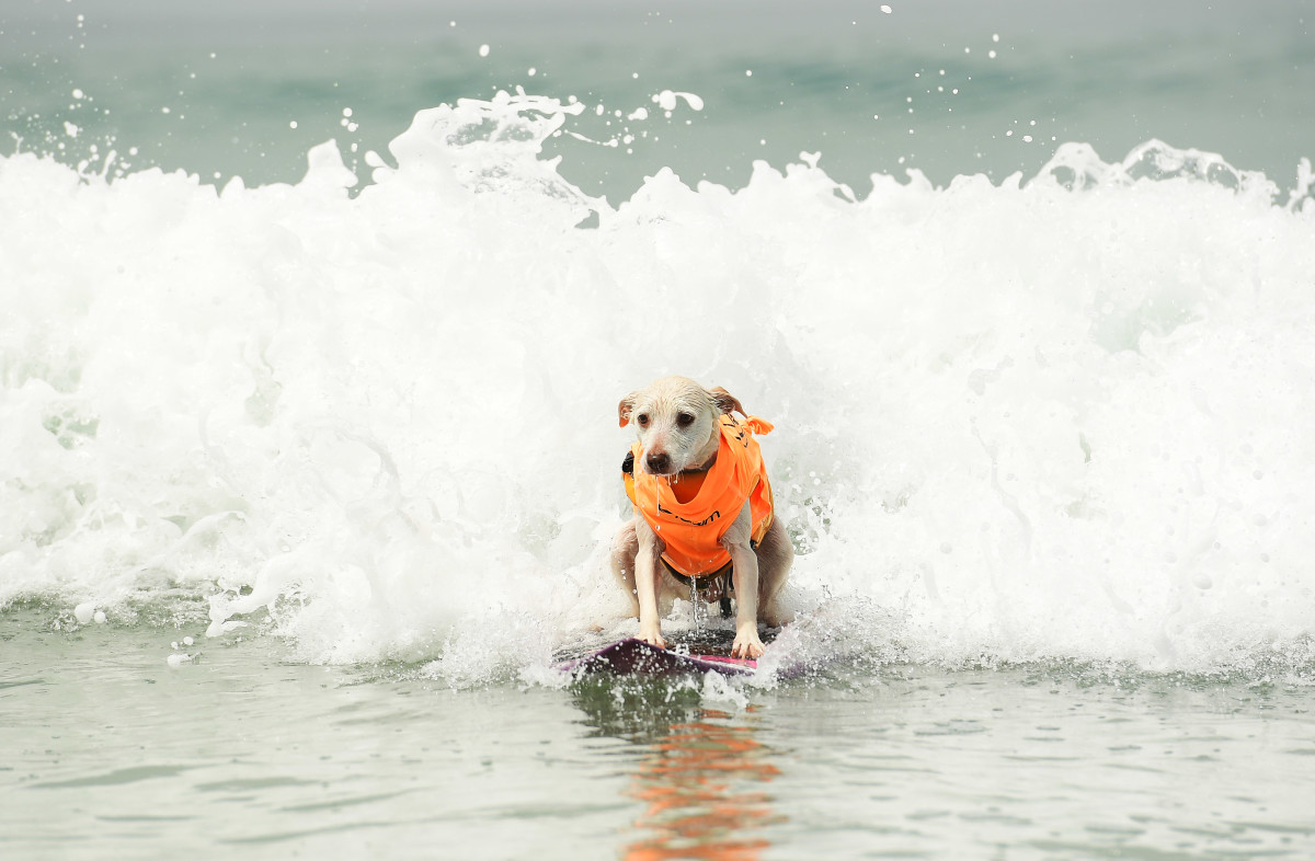 Surfing_Dogs_Gallery_013.jpg