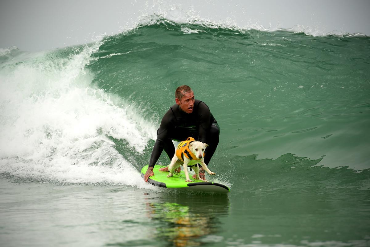 Surfing_Dog_Gallery_017.jpg
