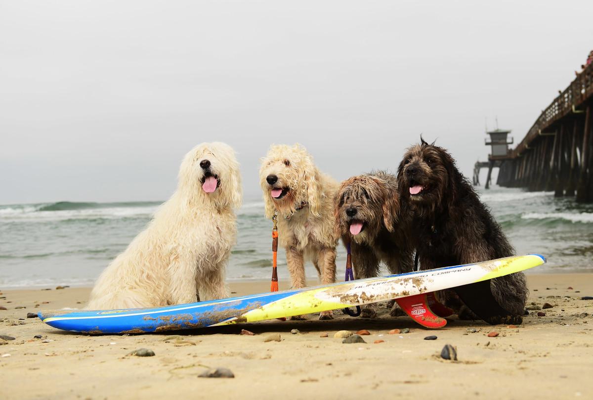 Surfing_Dogs_Gallery_0028.jpg