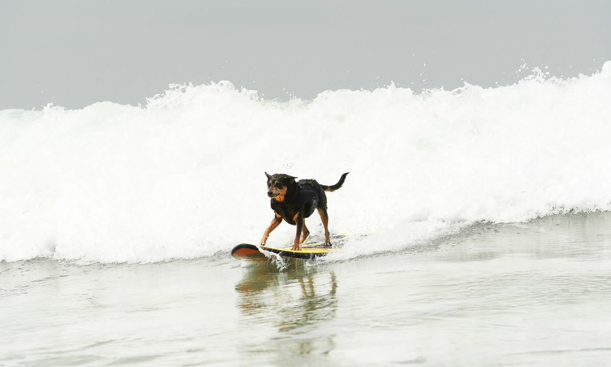 Surfign_Dogs_Gallery_010.jpg