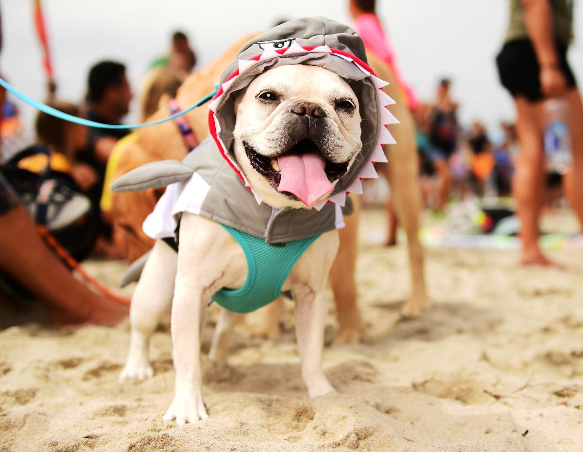 Surfing_Dogs_Gallery_024.jpg