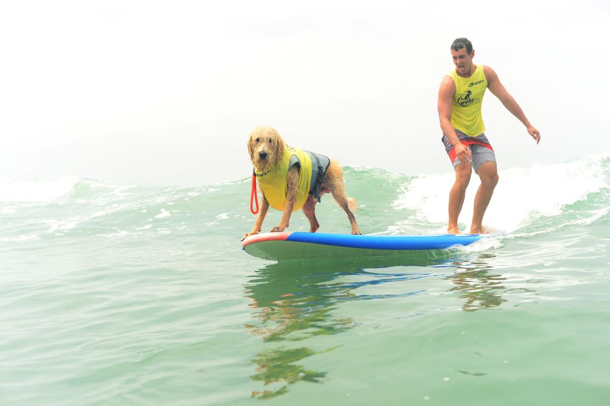 Surfing_Dogs_001.jpg