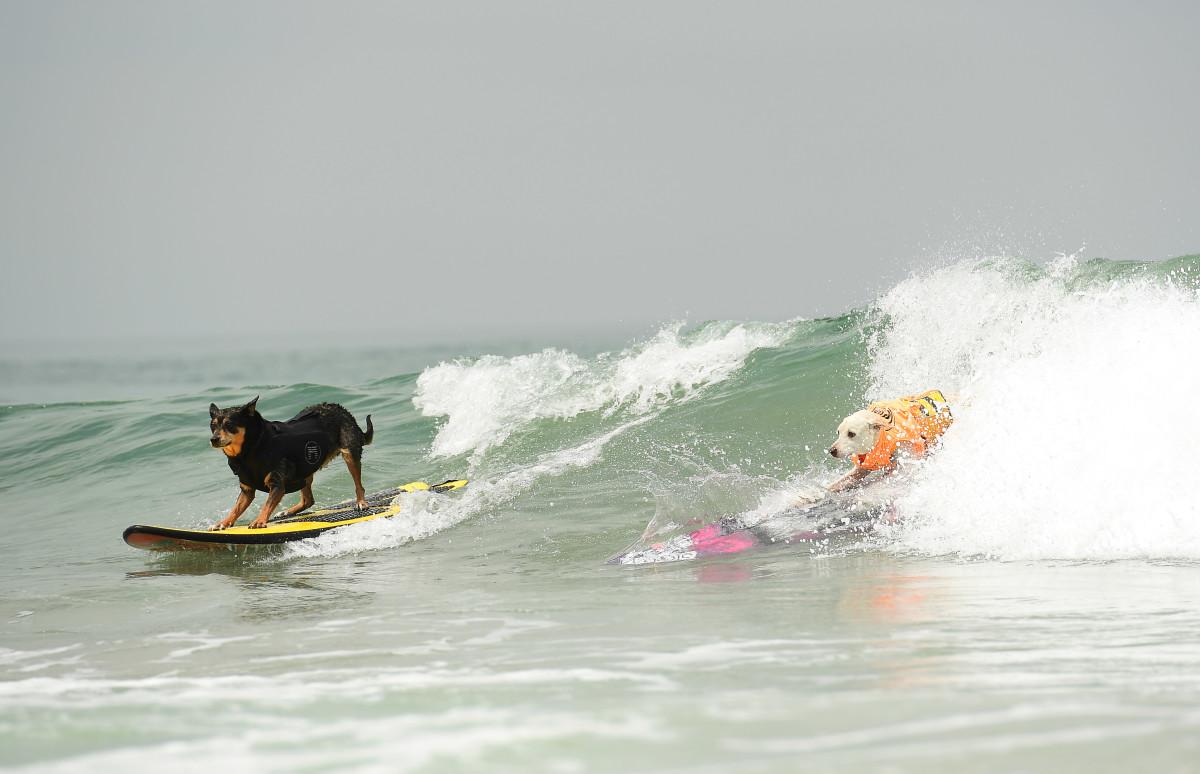 Surfing_Dogs_Gallery_014.jpg