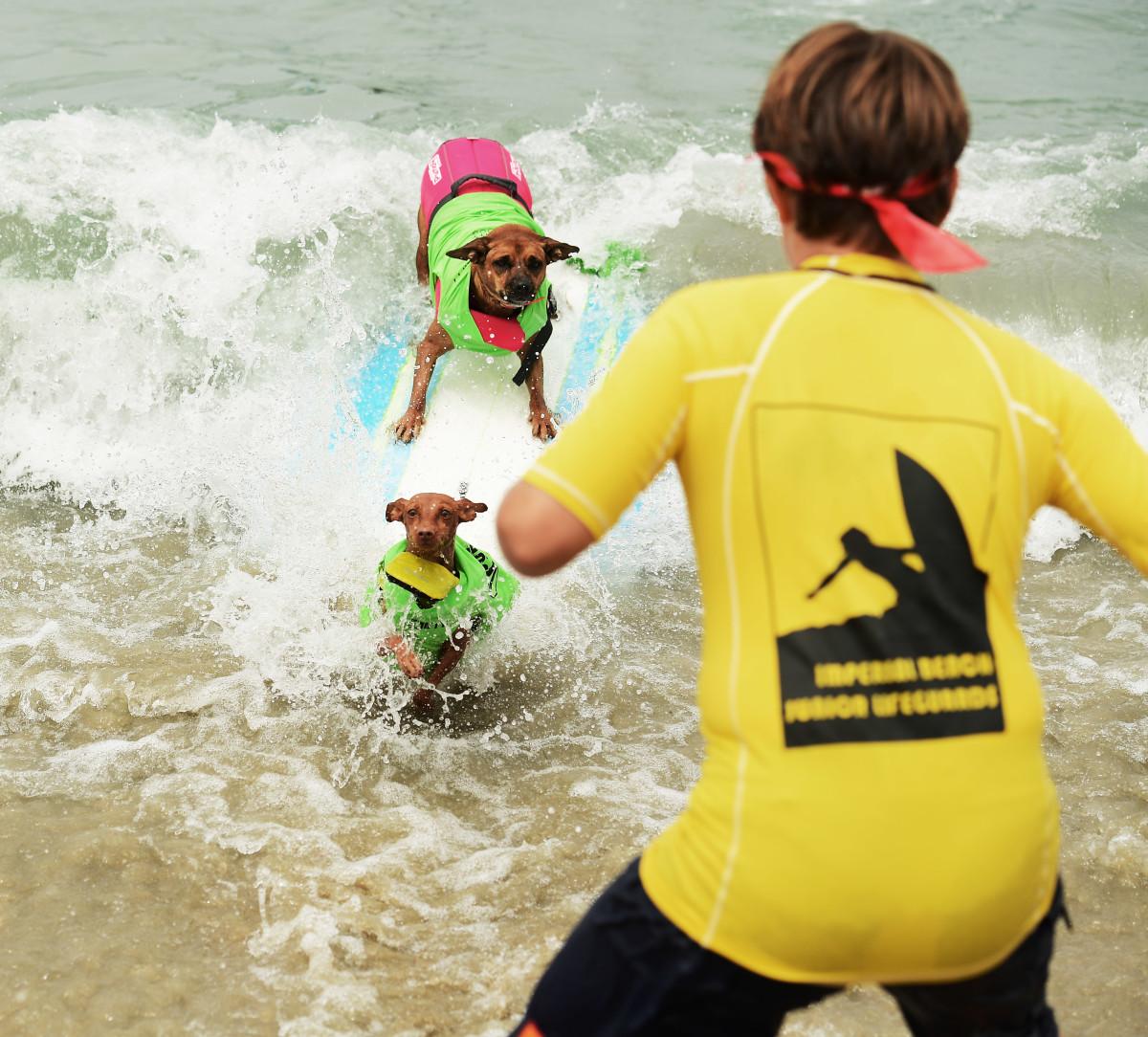 Surfing_Dogs_Gallery_006.jpg