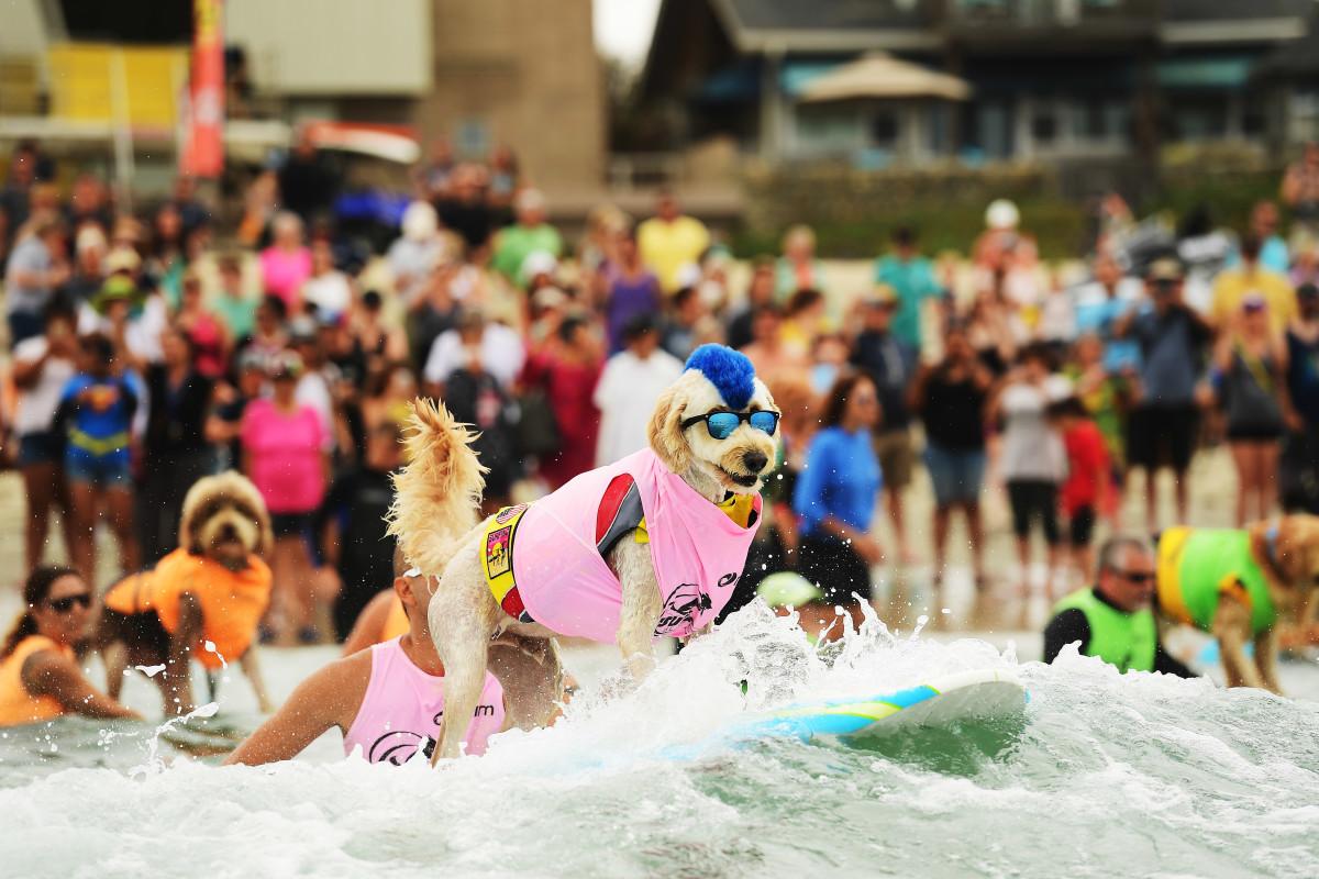 Surfing_Dogs_Gallery_021.jpg