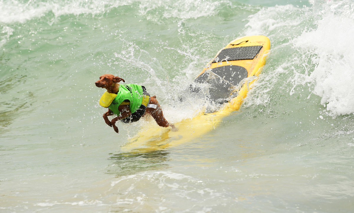 Surfing_Dog_Gallery_005.jpg