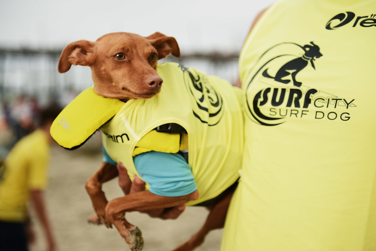 Surfing_Dog_Gallery_030.jpg