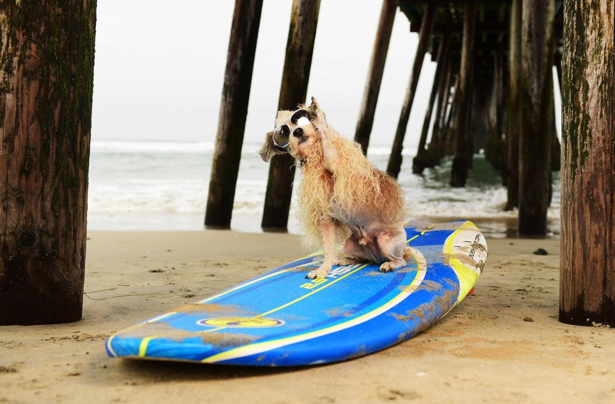 Surfing_Dogs_Gallery_027.jpg