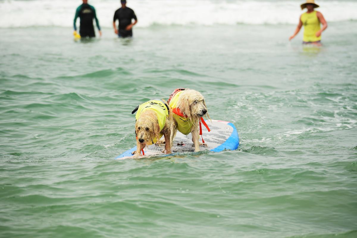 Surfing_Dogs_Gallery_007.jpg