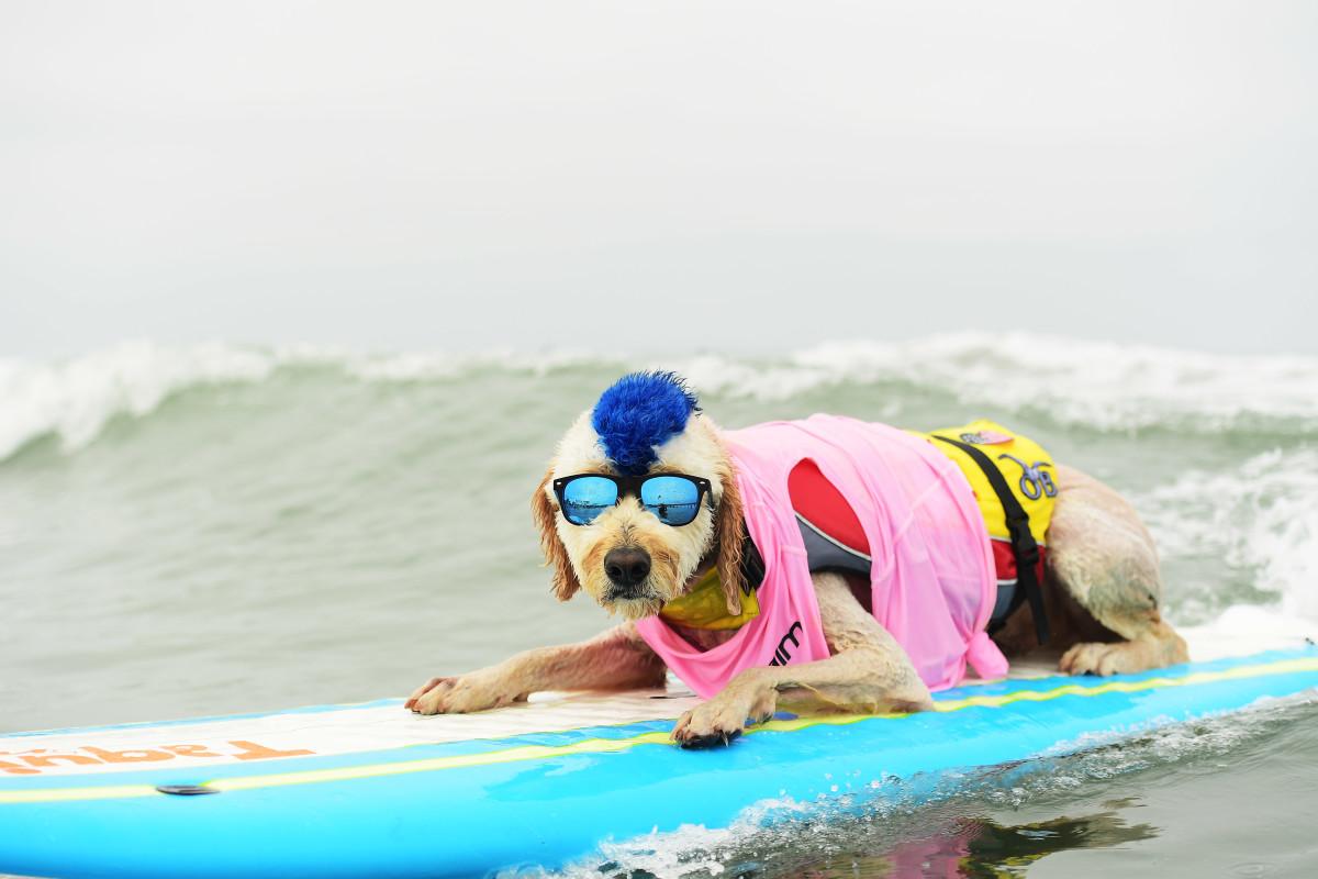 Surfing_Dog_Gallery_019.jpg