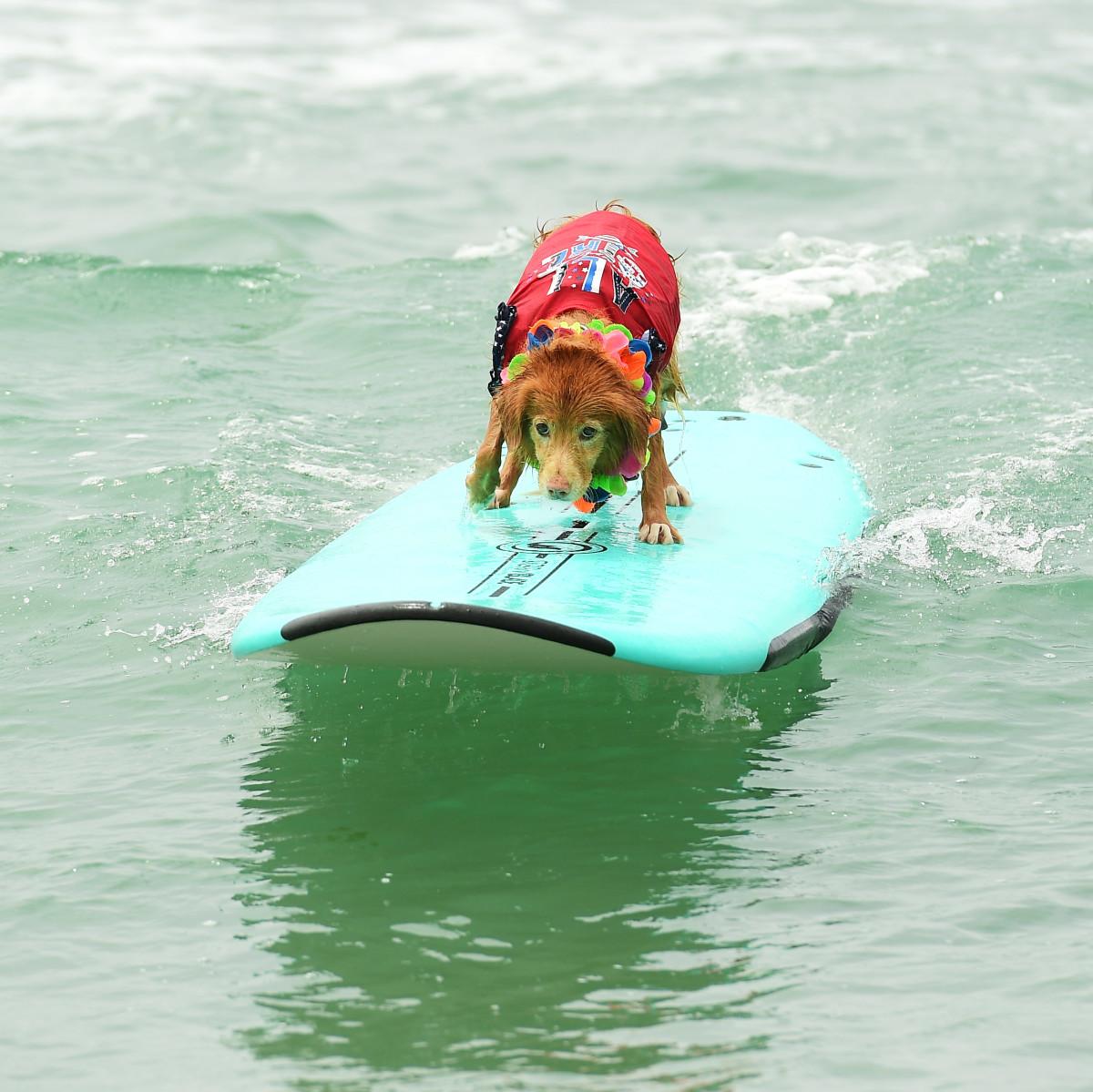 Surfing_Dog_Gallery_002.jpg
