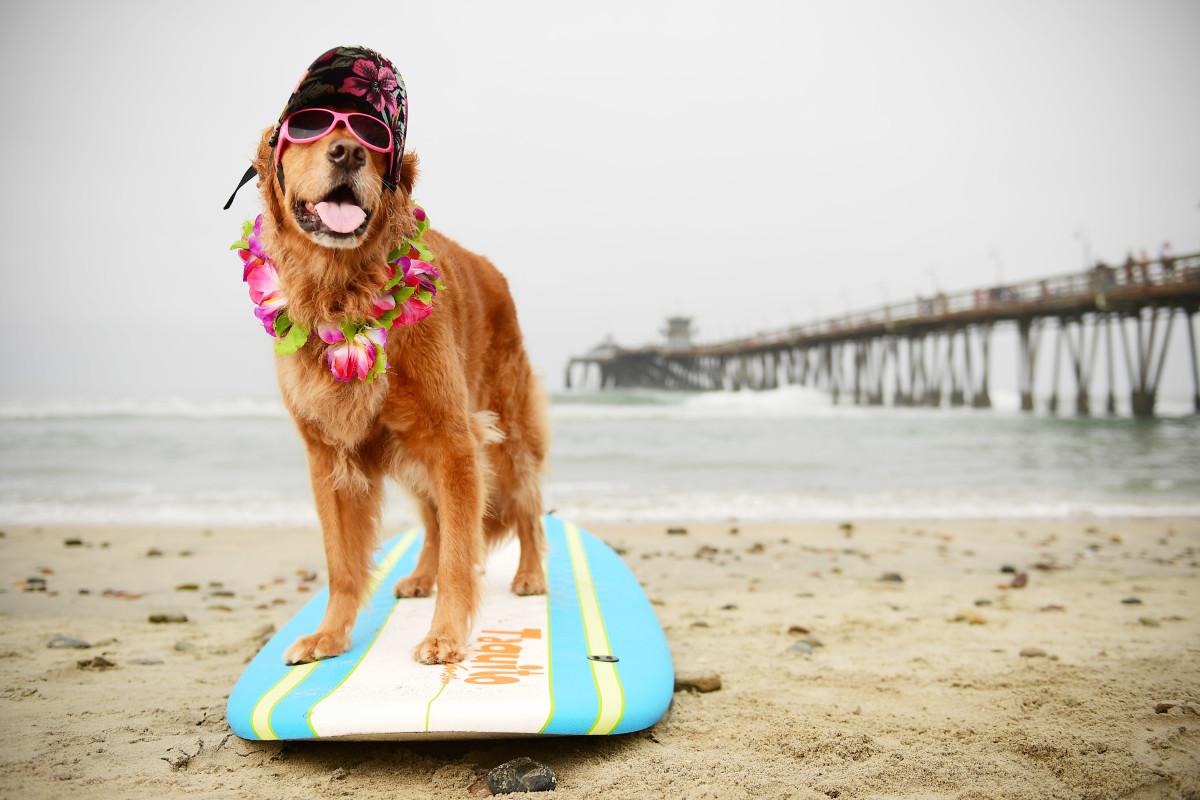 Surfing_Dogs_Gallery_025.jpg