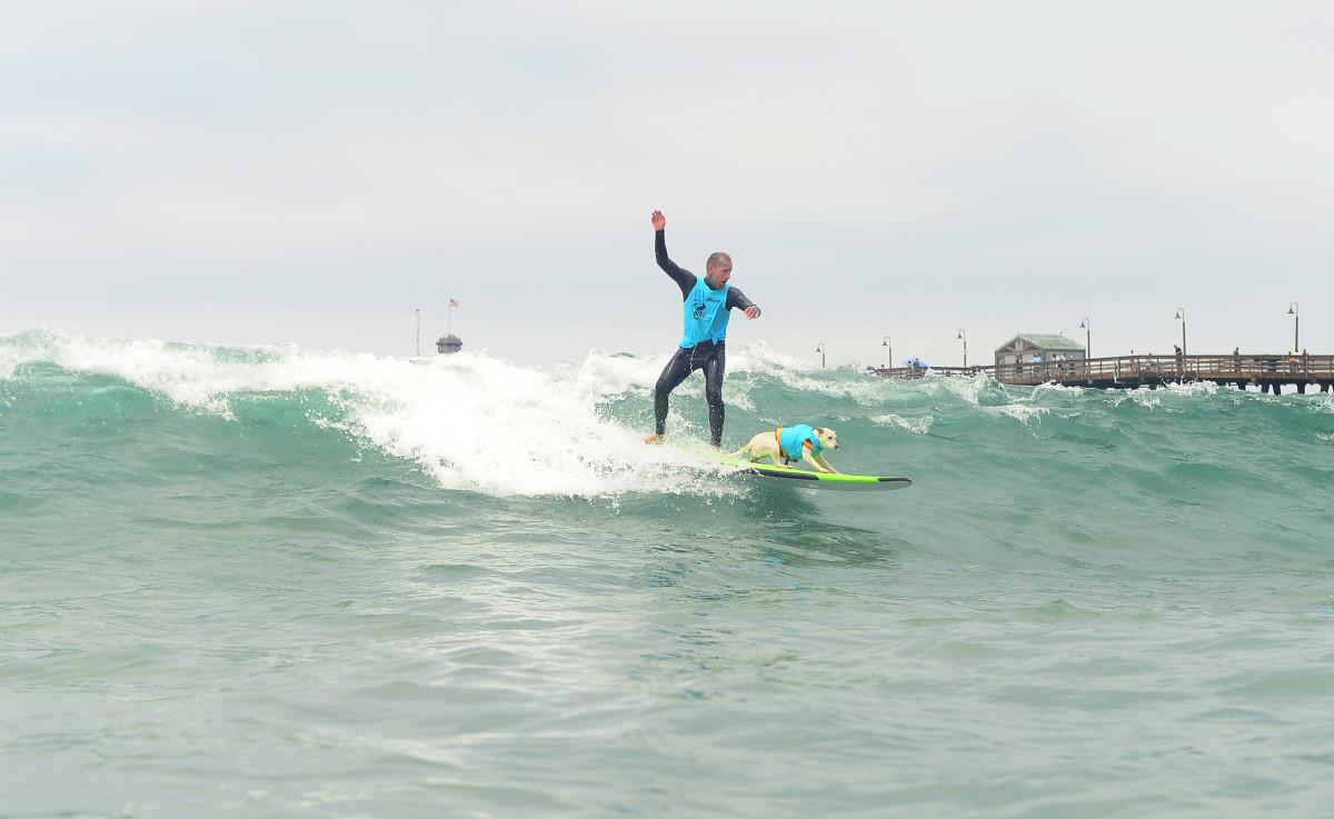 Surfing_Dogs_Gallery_038.jpg