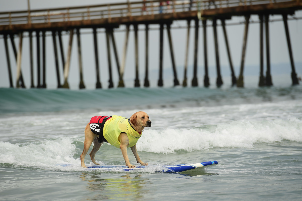 Surfing_Dog_Gallery_016.jpg