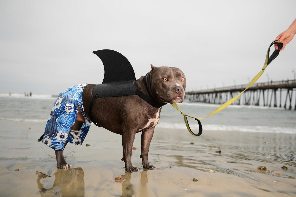 Surfing_Dogs_Gallery_035.jpg