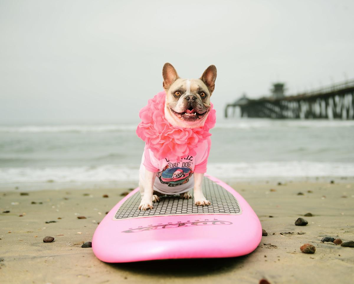 Surfing_Dogs_Gallery_034.jpg
