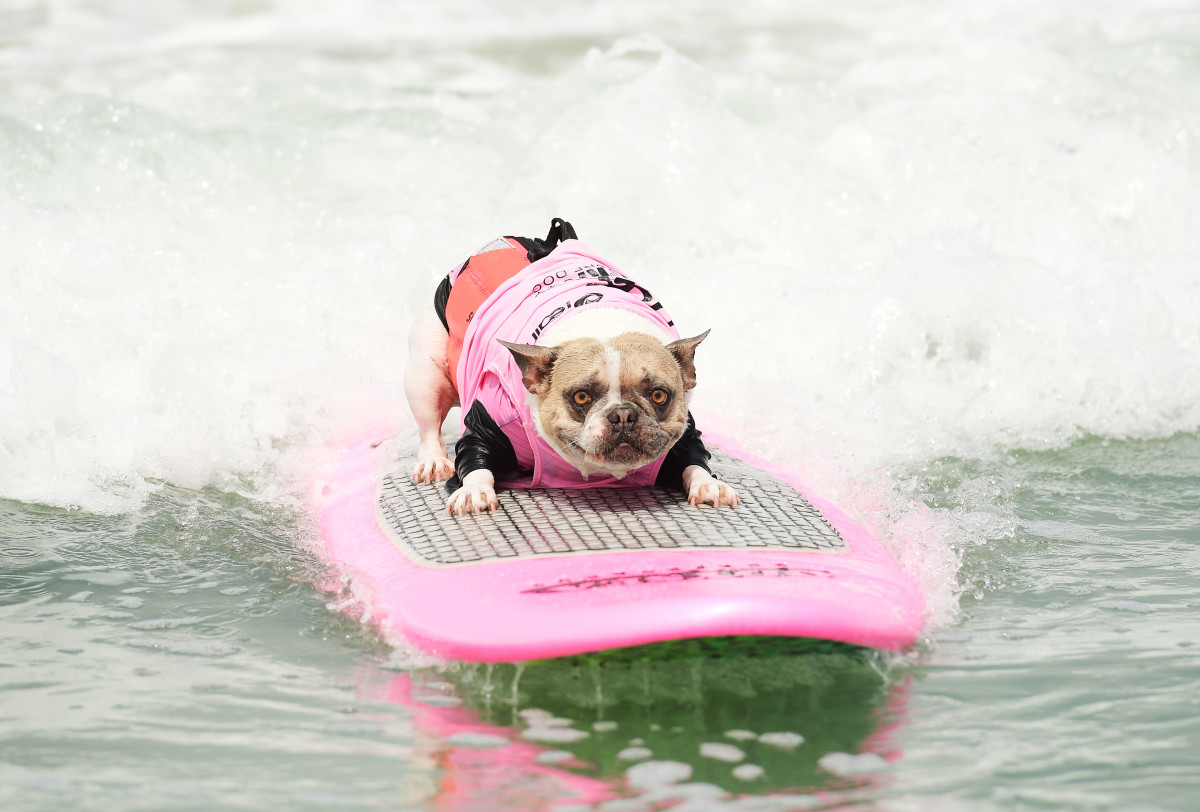 Surfing_Dogs_Gallery_12.jpg