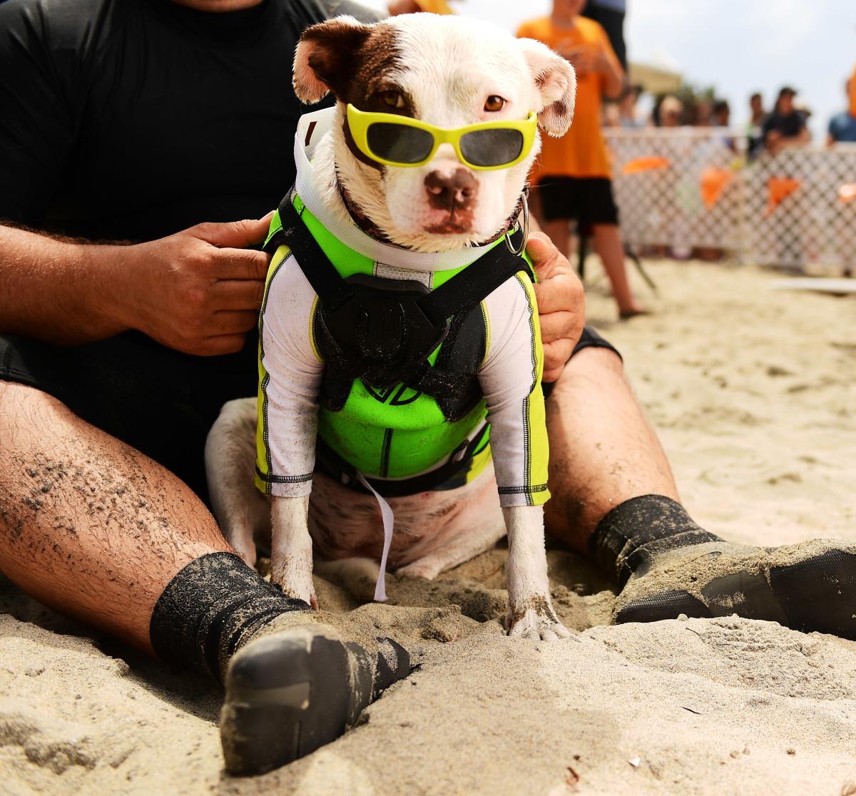 Surfing_Dogs_Gallery_023.jpg