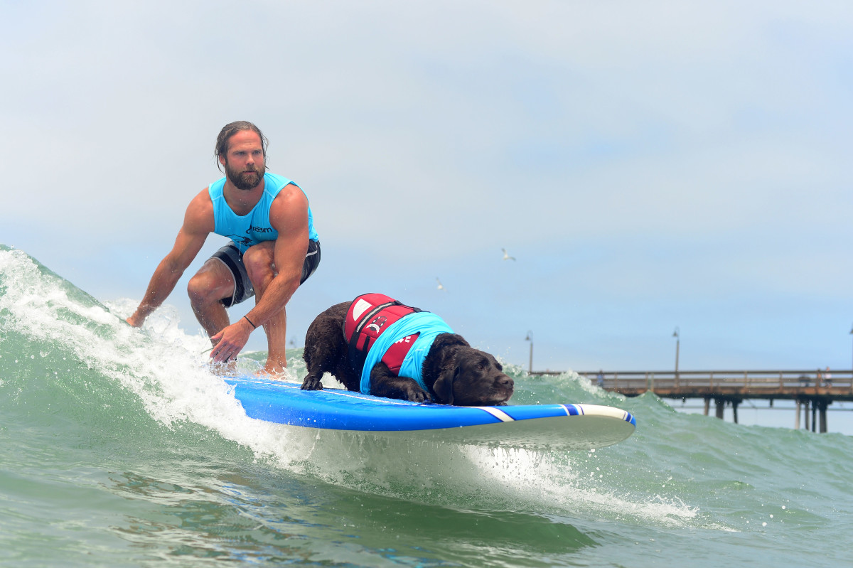 Surfign_Dogs_Gallery_041.jpg