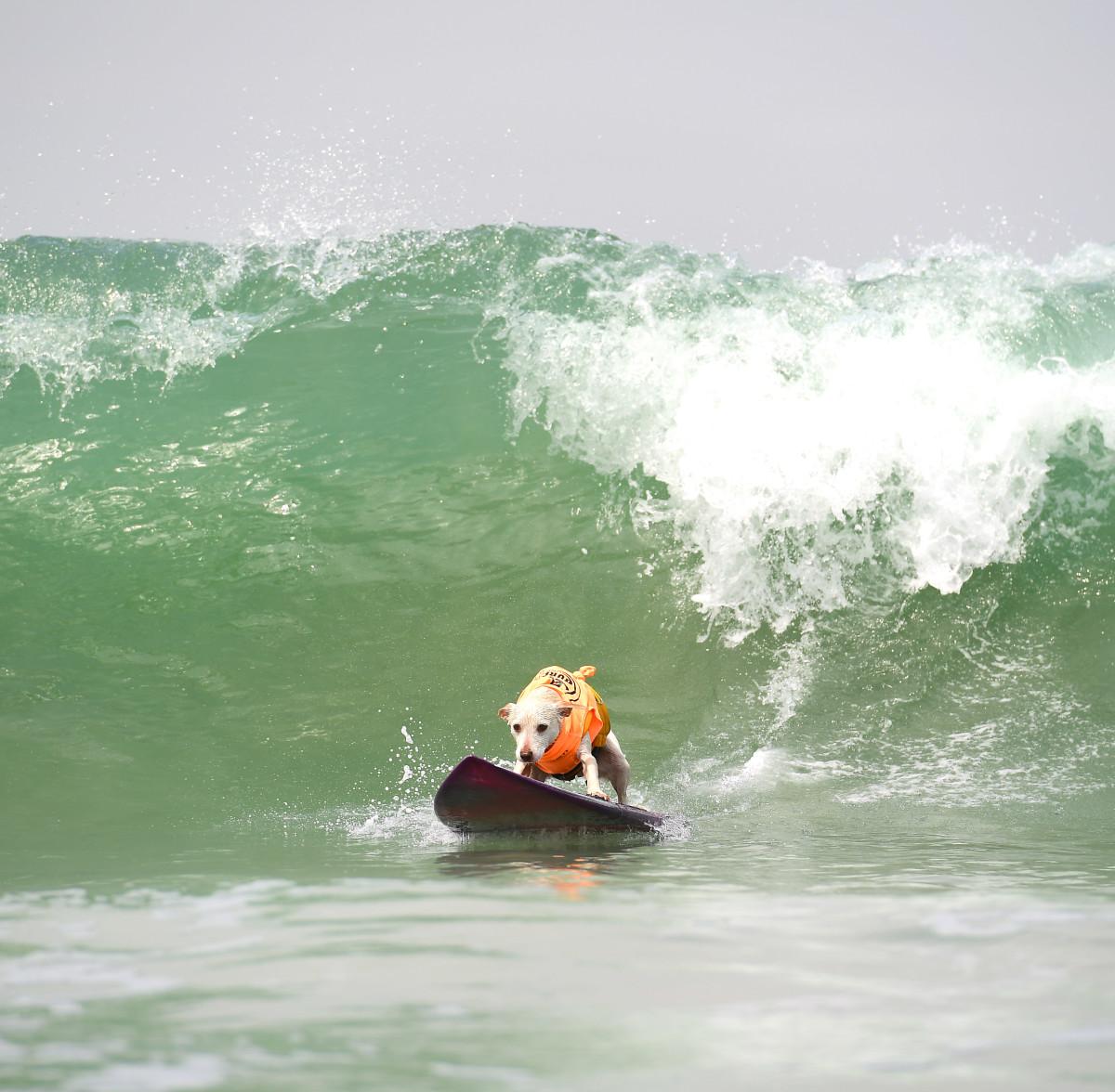 Surfign_Dogs_gallery_011.jpg