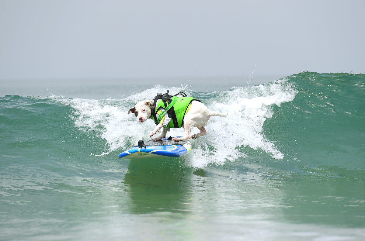 Surfing_Dogs_012.jpg