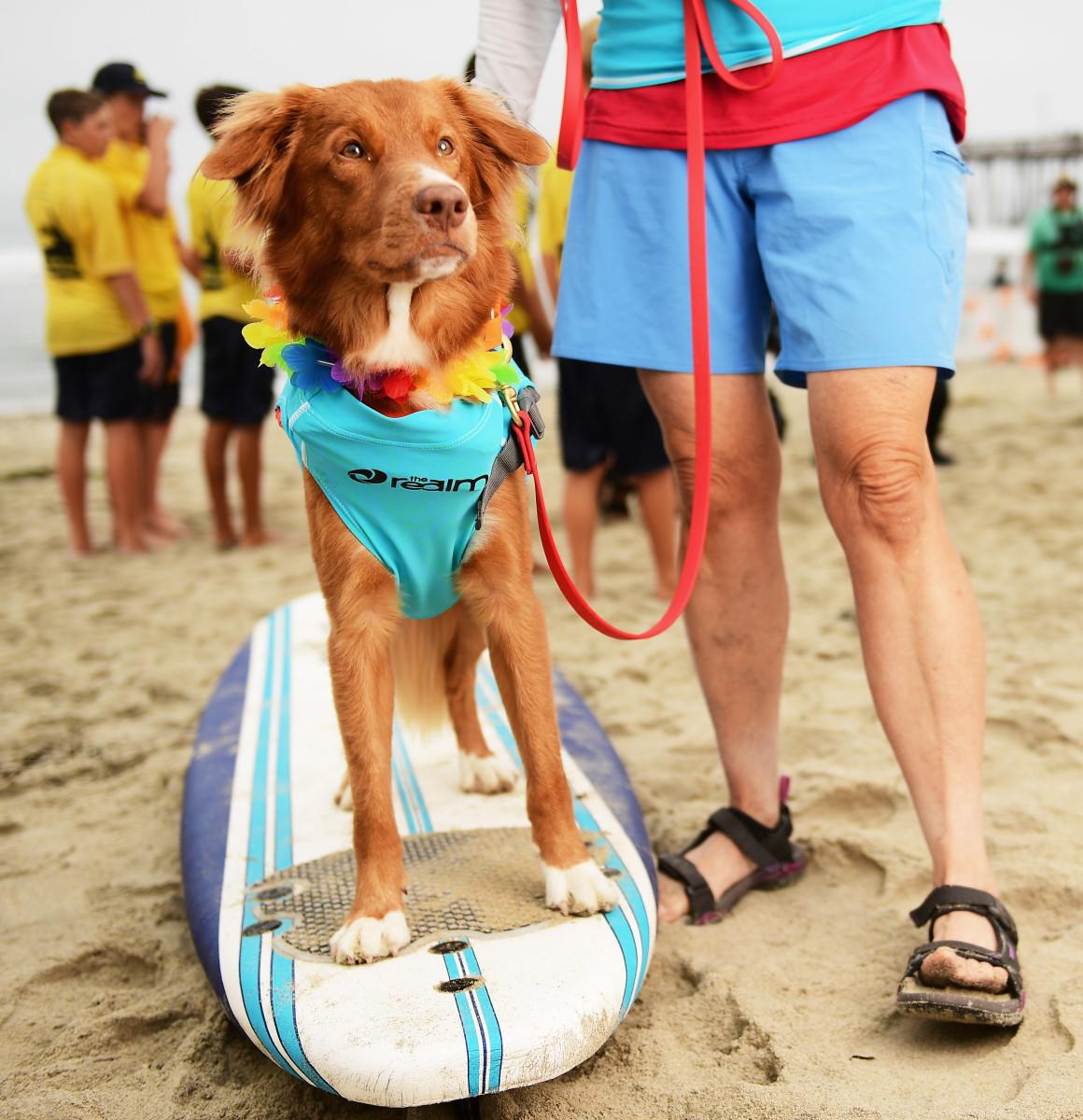 Surfing_Dogs_Gallery_031.jpg