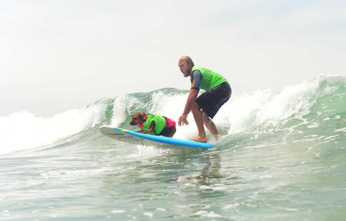 Surfing_Dogs_Gallery_040.jpg