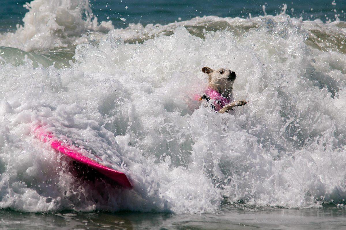 2016-0925-Surf-Dog-Competition.jpg
