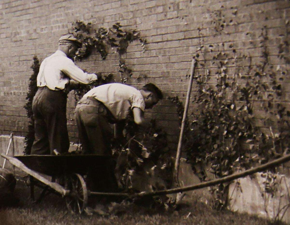 1937-Wrigley-Field-ivy..jpg