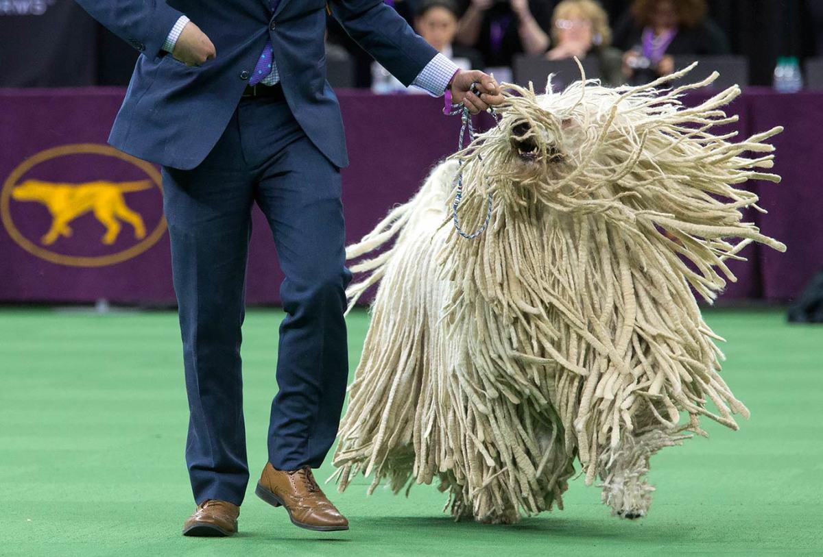 2016-0216-komondor-dog.jpg