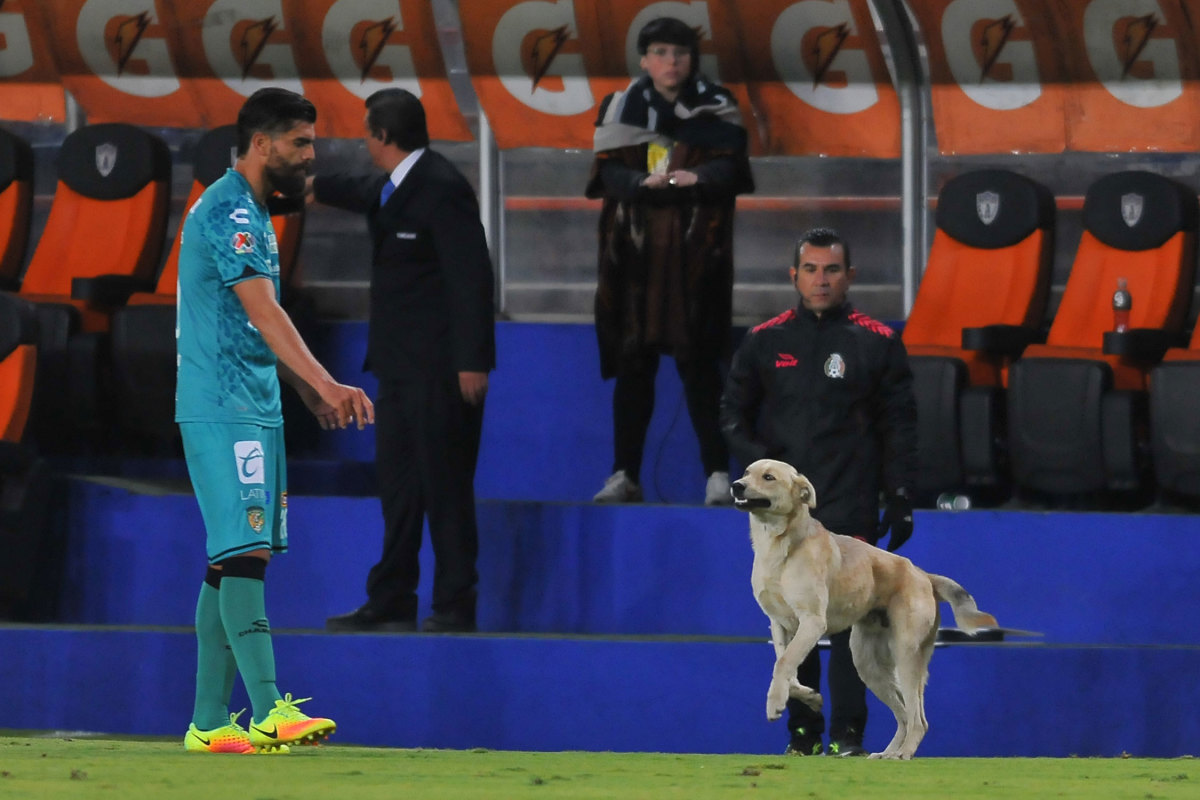 Dog-Mexico-Liga-MX.jpg