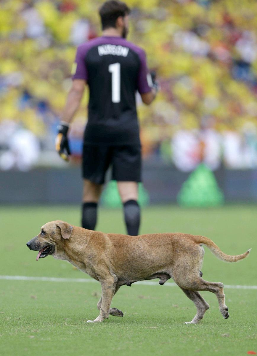Brazil-Colombia-Dog.jpg