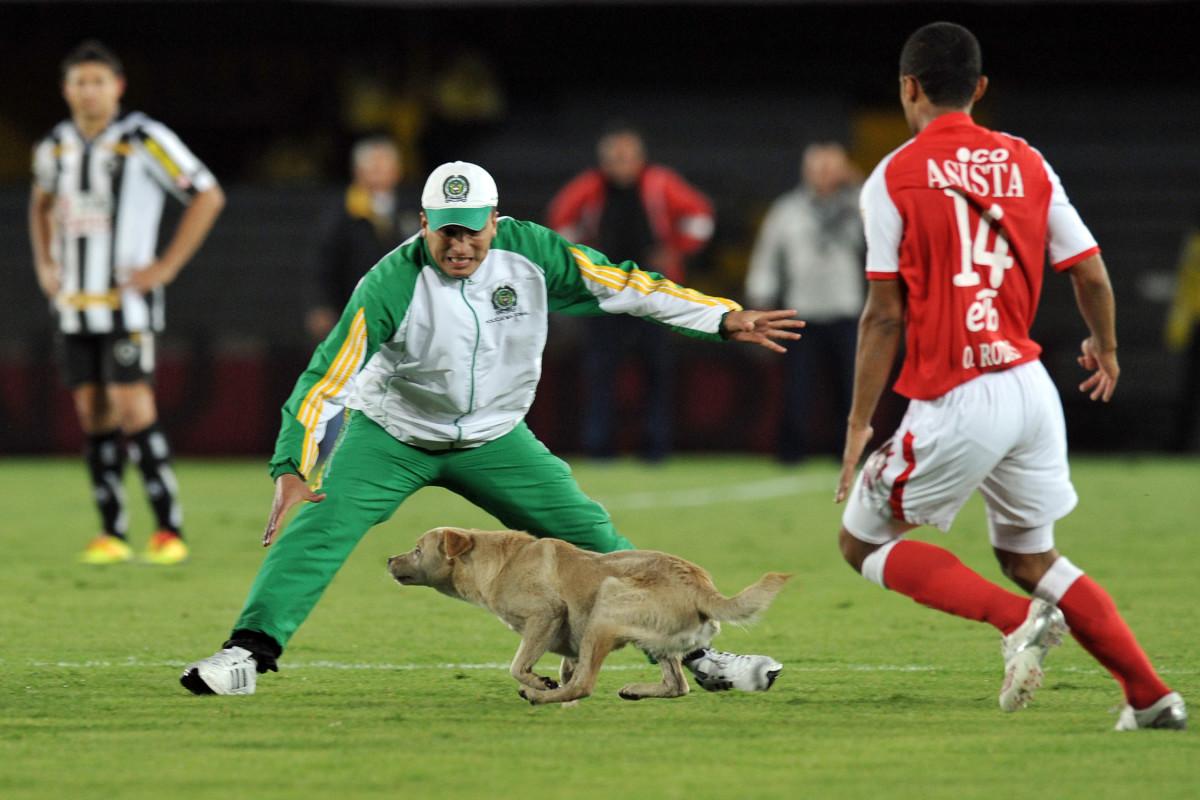 Dog-Pitch-Invader-6.jpg