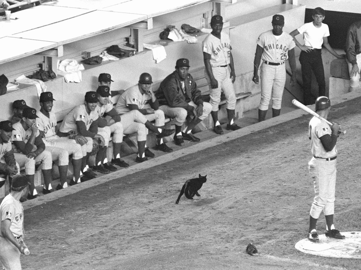 chicago-cubs-black-cat.jpg