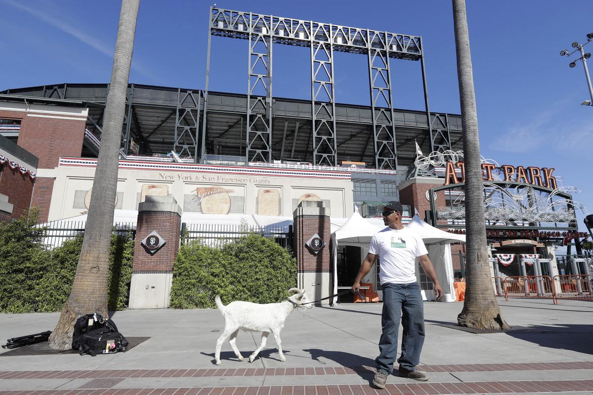 cubs-giants-fan-goat-curse-nlds.jpg