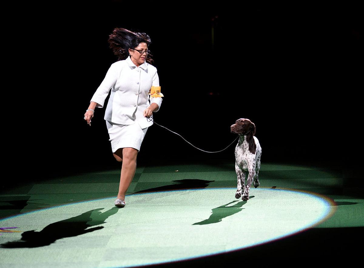 2016-Westminster-Kennel-Club-Dog-Show-X160227_TK4_0038.jpg