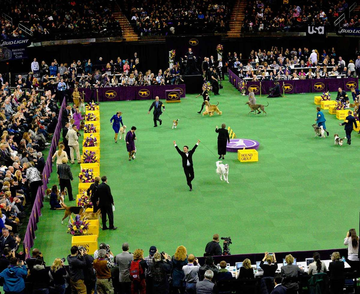 2016-Westminster-Kennel-Club-Dog-Show-X160227_TK3_0009.jpg