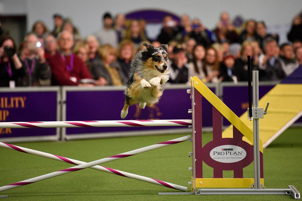 2016-Westminster-Kennel-Club-Dog-Show-X160227_TK1_0001.jpg
