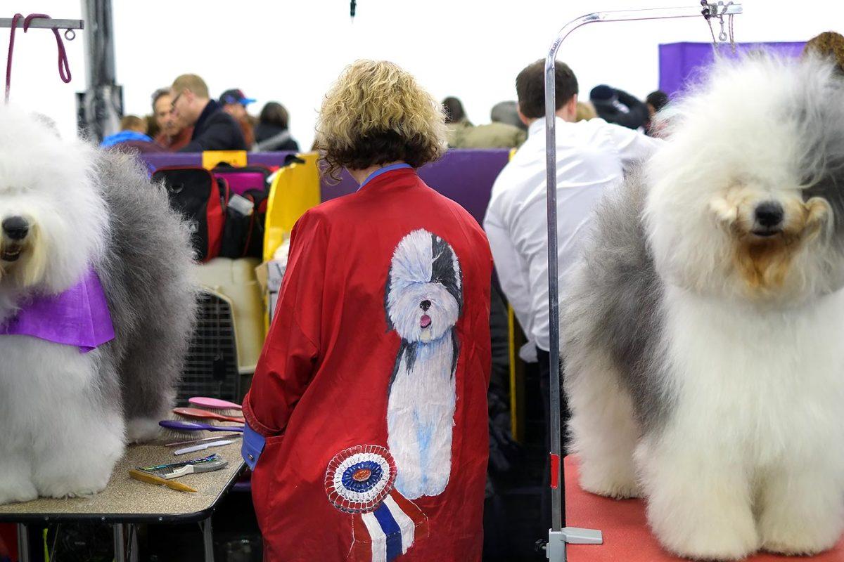 2016-Westminster-Kennel-Club-Dog-Show-X160227_TK2_0047.jpg