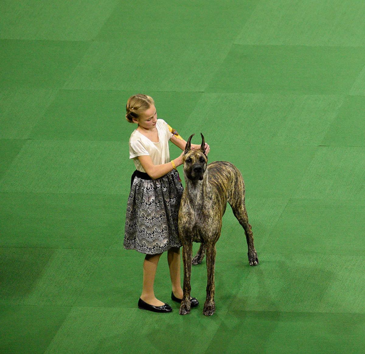2016-Westminster-Kennel-Club-Dog-Show-X160227_TK4_0010.jpg