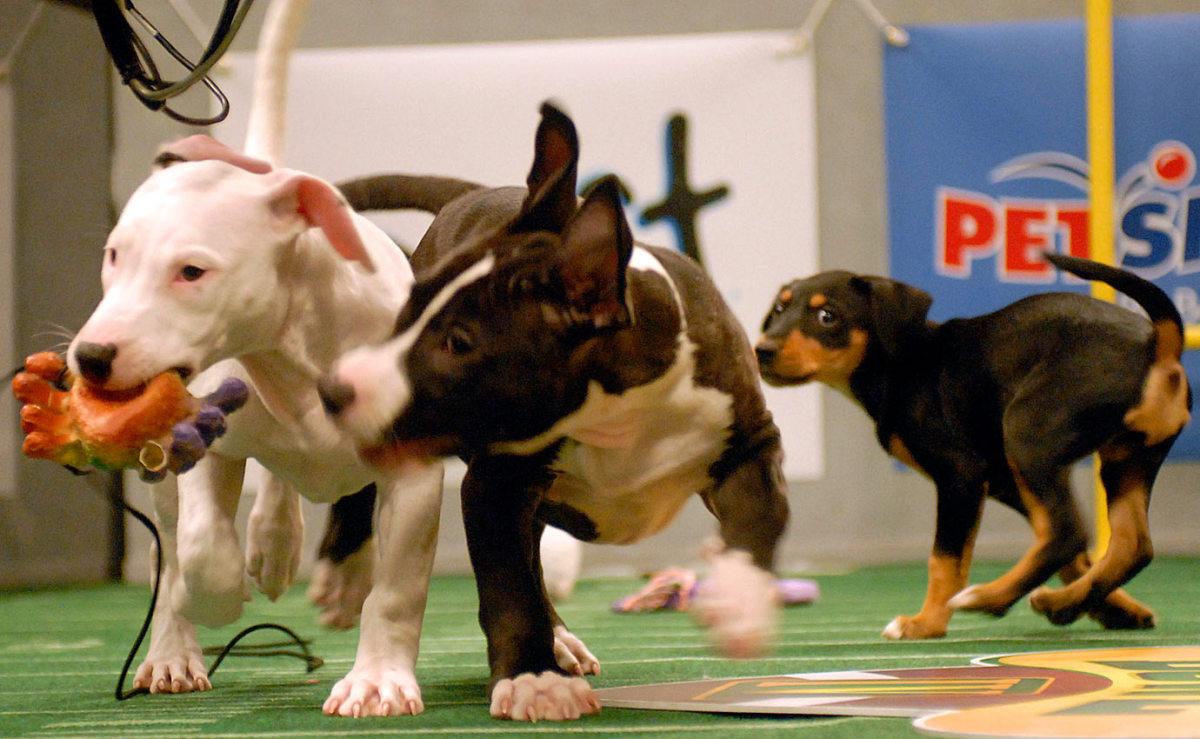 Puppy-Bowl-IV-AP071016028913_0.jpg