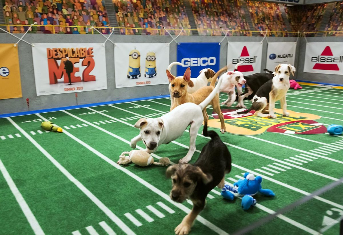 Puppy-Bowl-IX(1).jpg