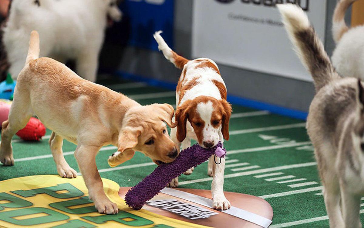 Puppy-Bowl-X(2).jpg