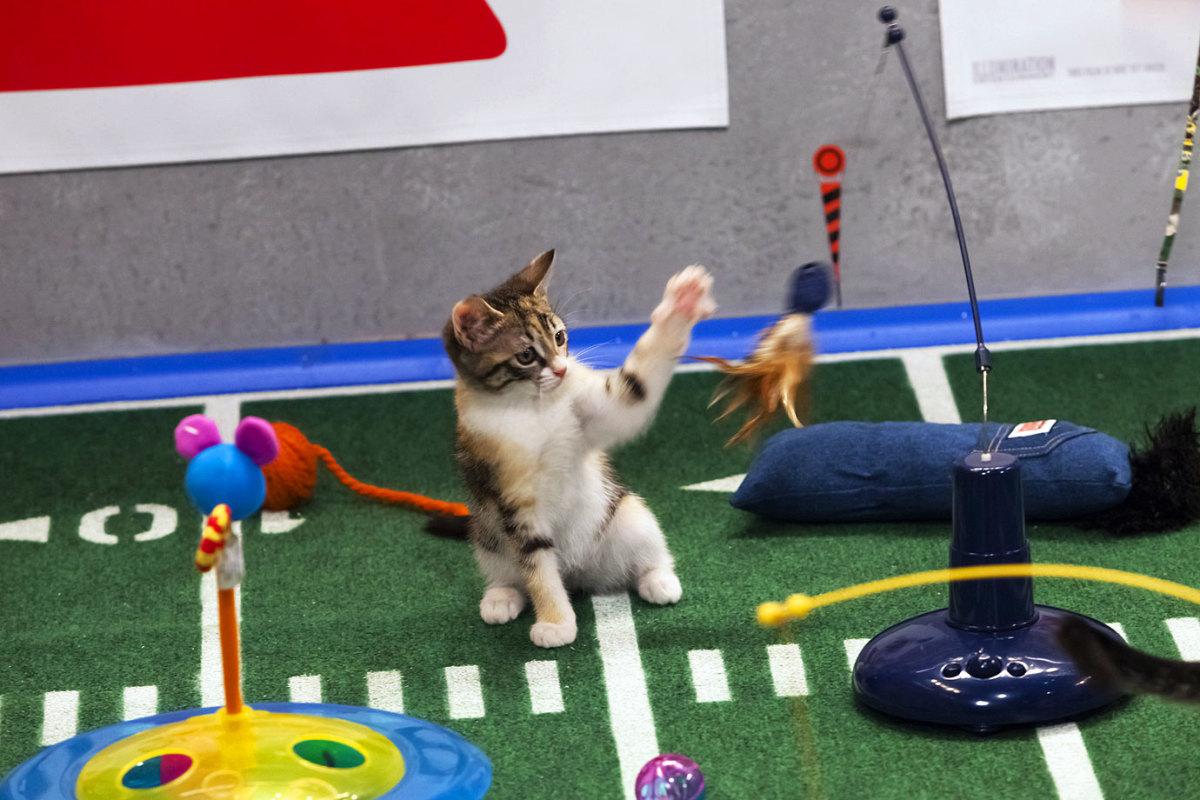 Puppy-Bowl-IX-halftime-kitten.jpg